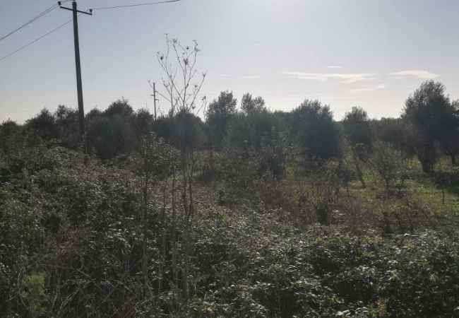 SHITET TOKË  NË GRADISHT, LUSHNJE Shitet tokë are në Gradisht, Lushnje.Sipërfaqa e tokës është 8300 m², e