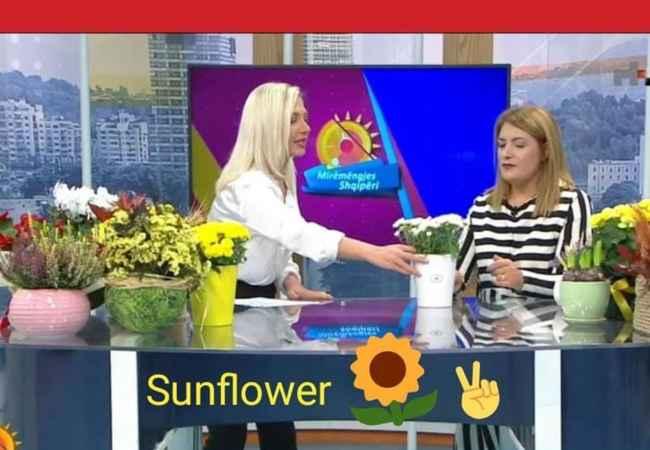 Organizime festash SUN FLOWER